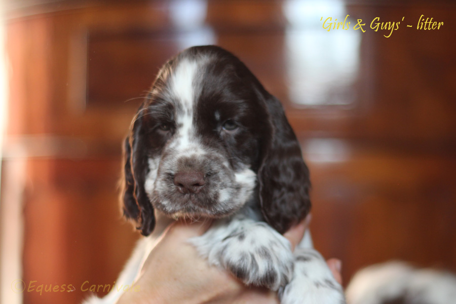 Portraits of puppies – new!