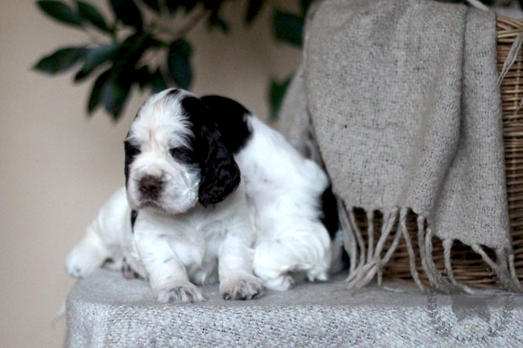 New pictures of H_SONG litter!