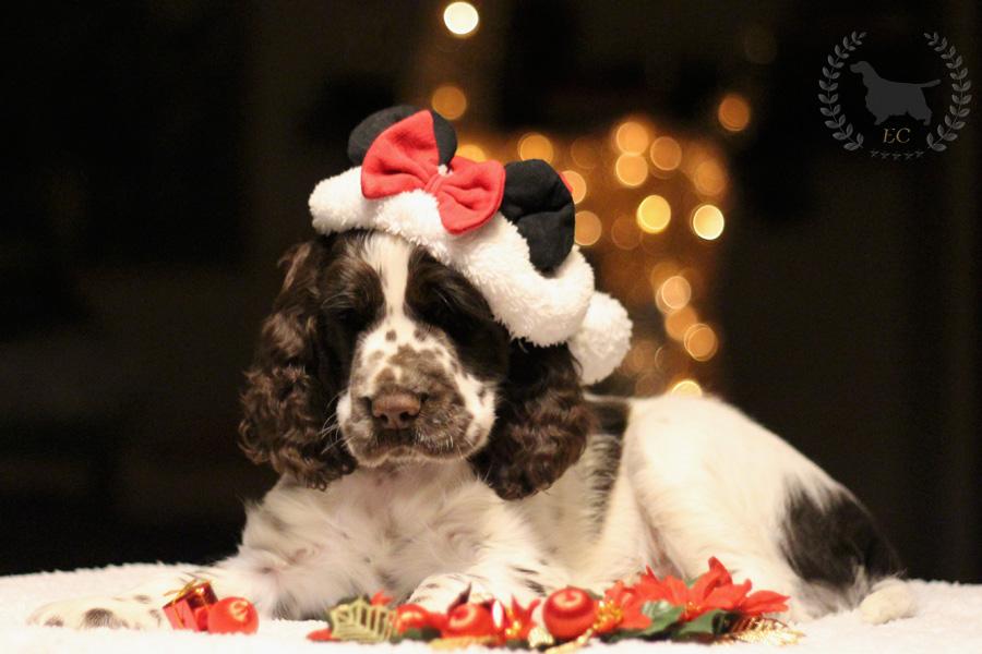 Ho Ho Ho!!!   Merry Christmas!!!